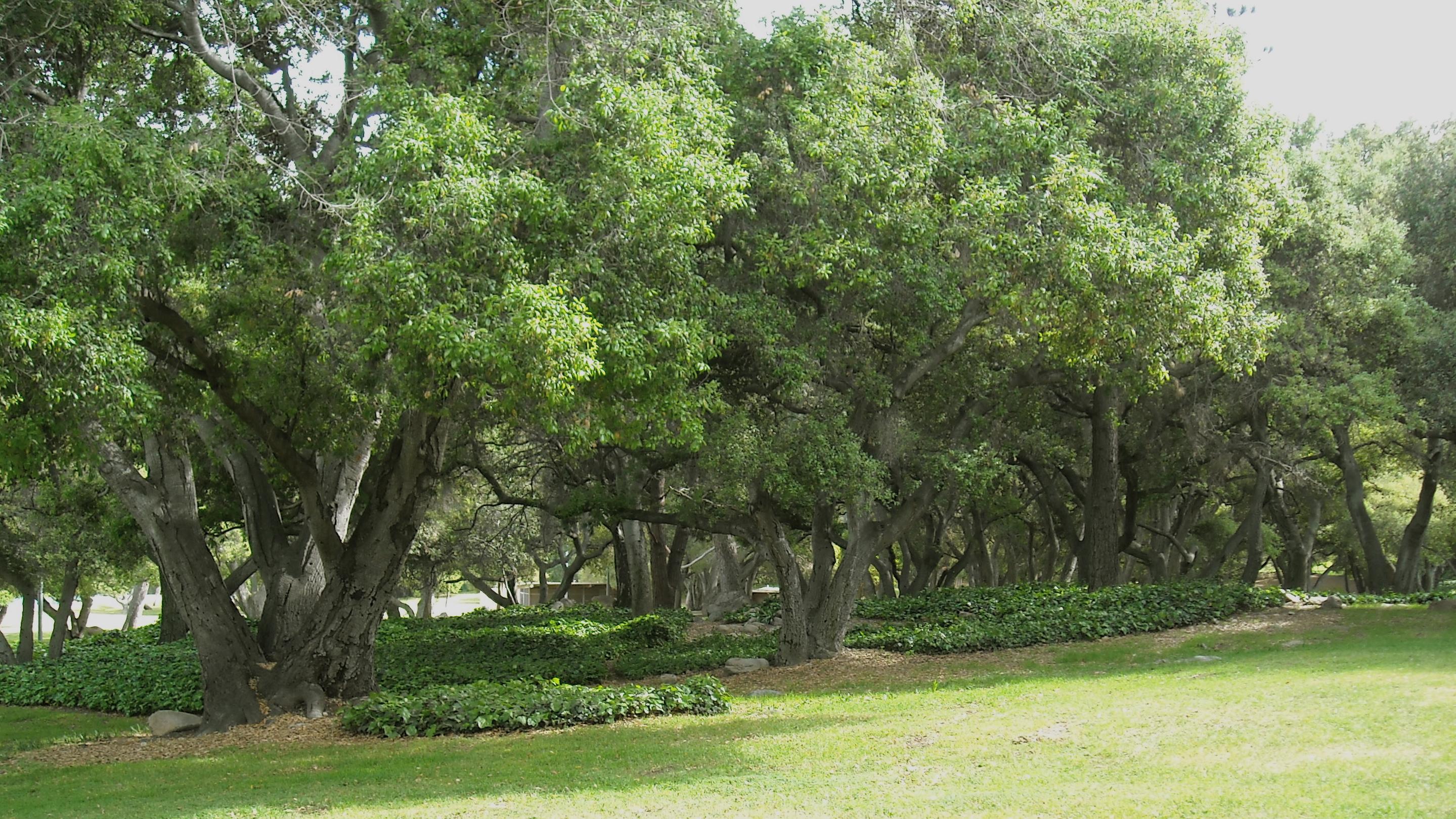 Oak Grove in Californi...